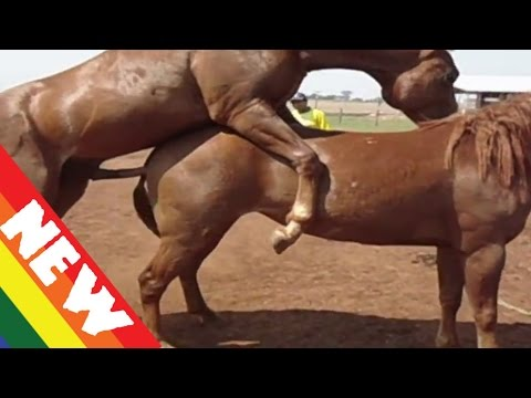 Animals Mating: Donkey Mating,Hosre Mating - Funny Animals Mating Compilation 2015 - YouTube