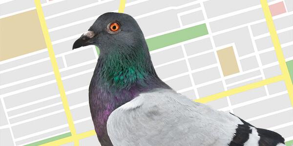 maps-pigeon-600