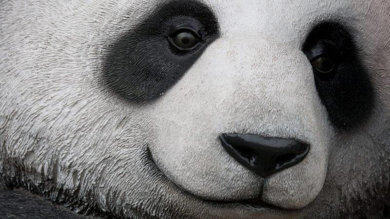 panda-face-ss-1920