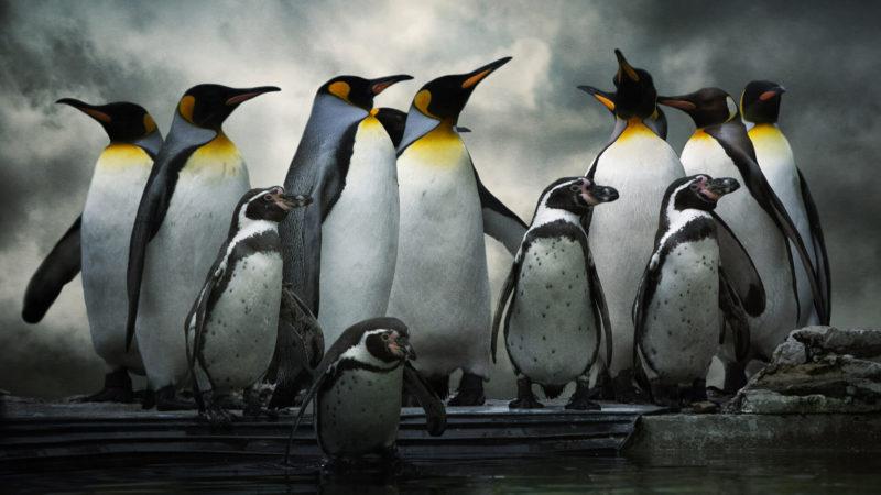 penguins-ss-1920