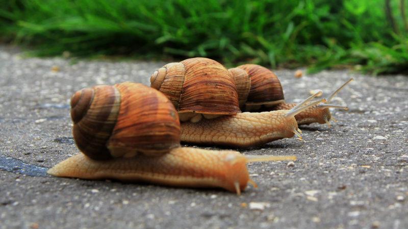 speed-slow-snails-ss-1920