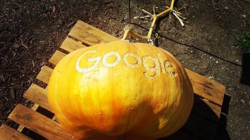 google-pumpkin