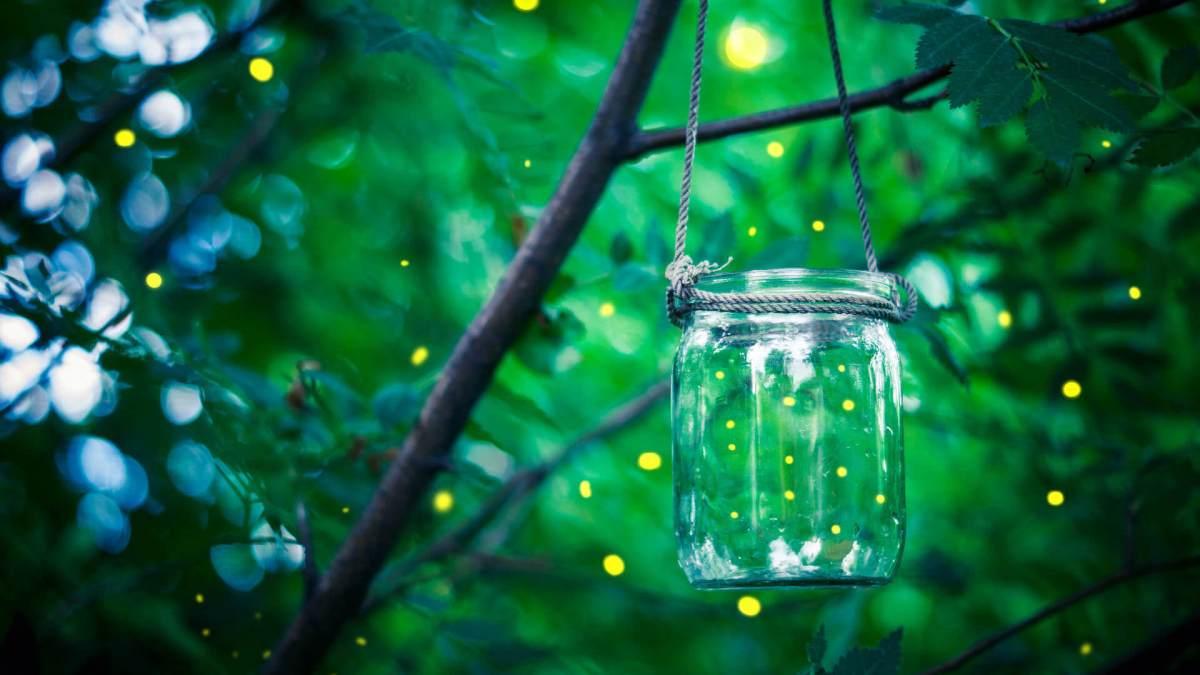 fireflies-jar-ss-1920