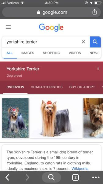 mobile screenshot showing search results for Yorkshire terrier