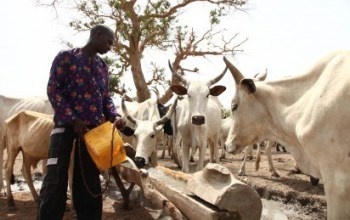 Herdsmen: kill One, Injure Another In Delta