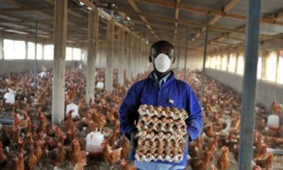 APPLY: How to obtain UK short-term visa for poultry workers, truck drivers