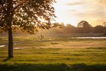 Wimbledon common in Golden Hour (2)