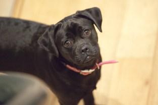 Puppy 1: Bailey