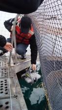 Aquaculture - 1.JPG