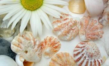kitten paw seashells
