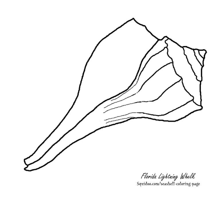 Florida lightning whelk coloring page