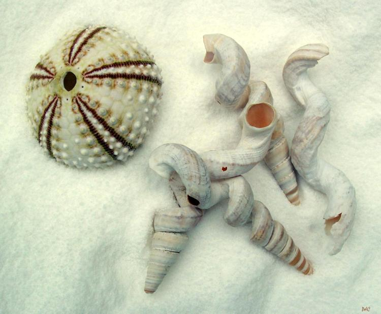 worm shells and sea urchin