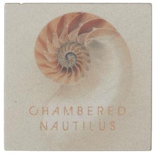 nautilus shell coaster