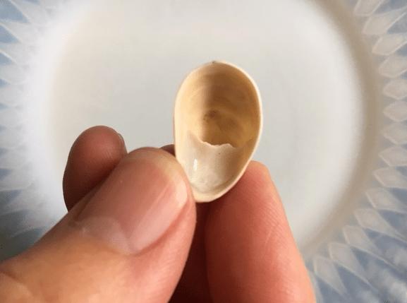 slipper shell bottom