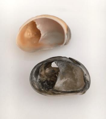 underside of slipper shells