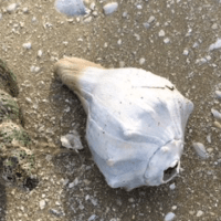 The Rules About Collecting Seashells in Florida