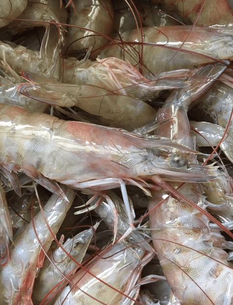 shrimp head with spike
