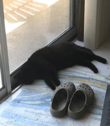 cat sleeping in July