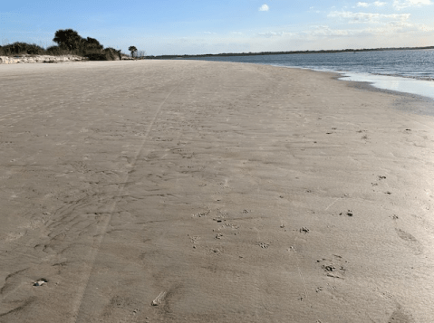 dog beach at low tide