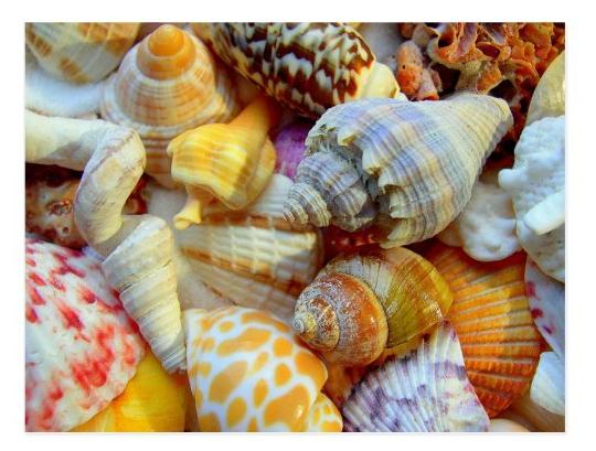 Colorful tropical seashells postcard