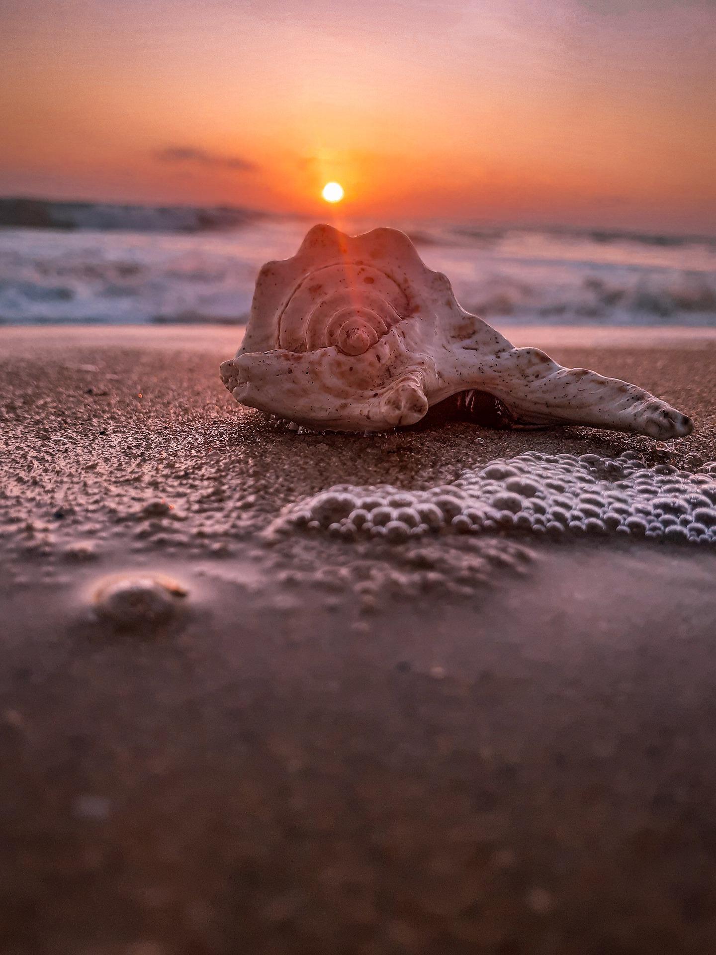beach sunrise sunset seashell sand ocean
