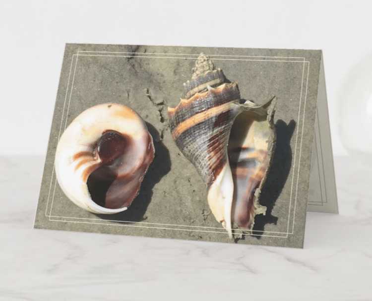 crown conch note cards folded blank custom message