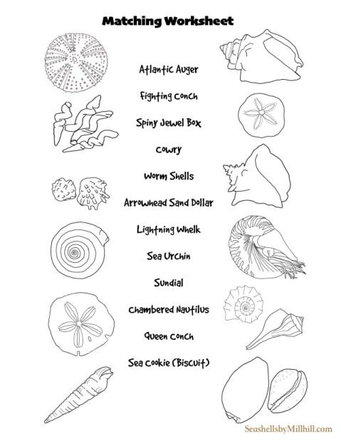 seashell ID matching worksheet printable free classroom paper