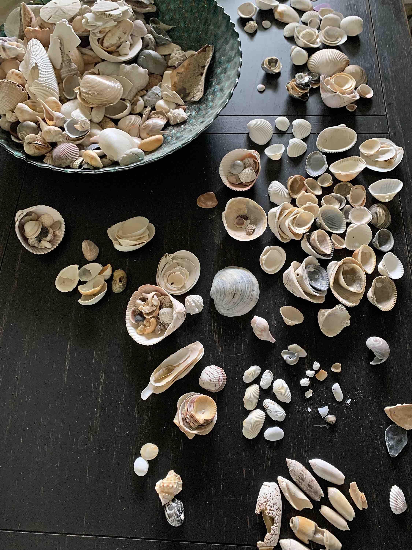 seashell collection identification
