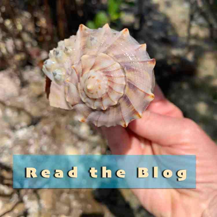 blog photo link, read the blog
