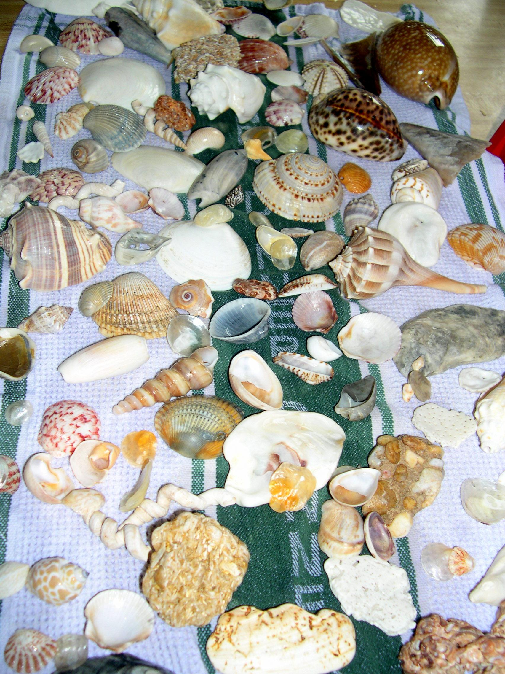 What Are Mollusks Or Molluscs In The United Kingdom