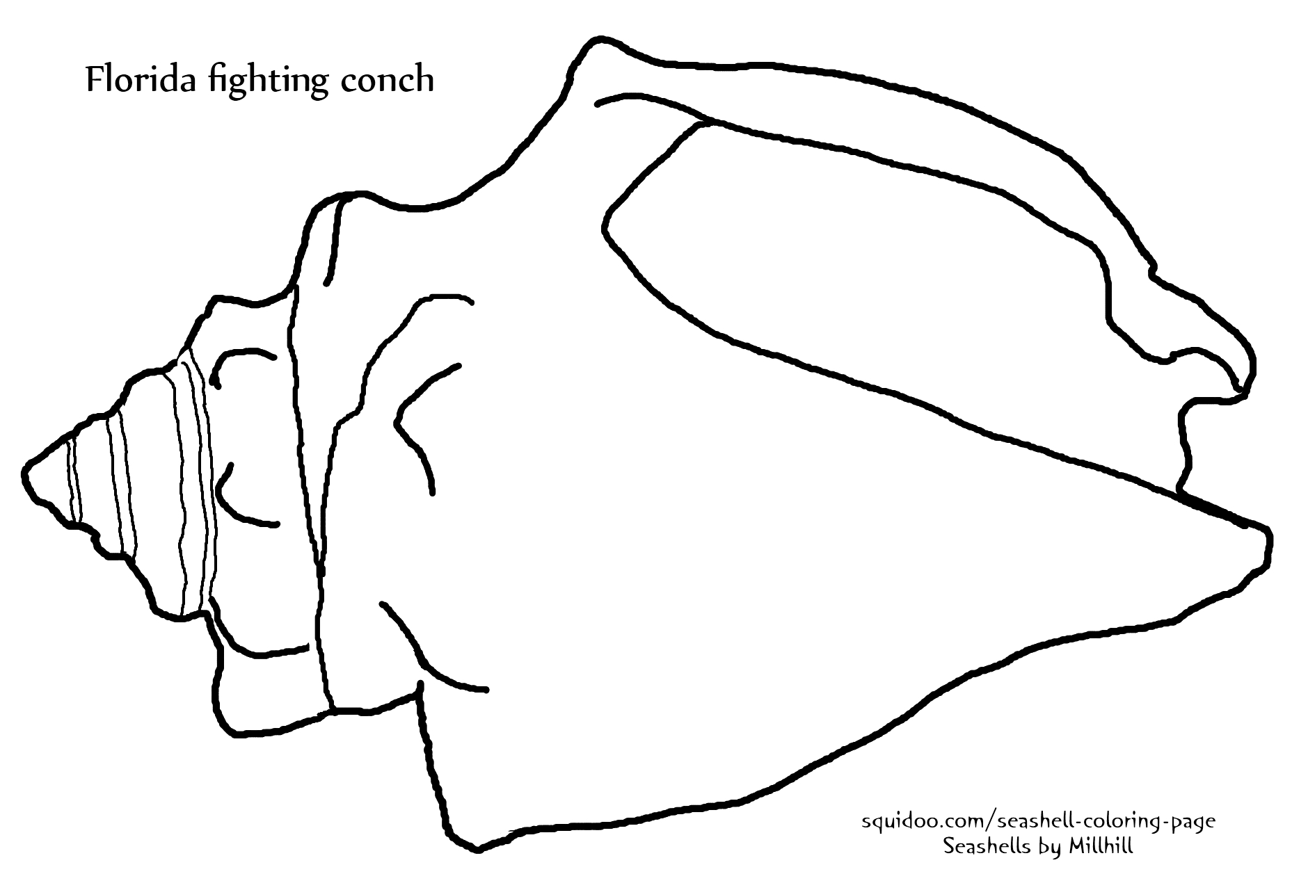 Fighting Conch Seashell Coloring Page Seashells By Millhill