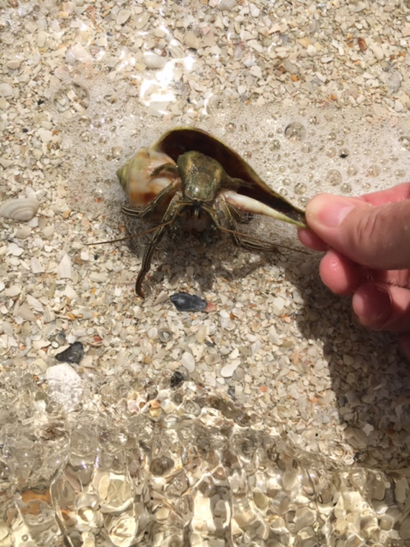 Hermit Crabs And Why They Must Fight For Those Seashell