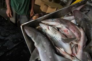 Sea Shepherd, Sola Stella Mission, Liberia