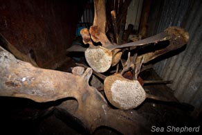 editorial_110729_1_2_The_last_whaling_station_0185