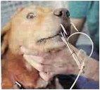 reward_dog_with_hook_thru_nose
