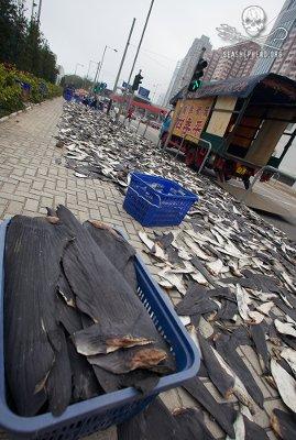 editorial-140314-1-5-fins-in-street-hk.jpg