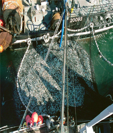 Two Purse Seine Trawlers with a catch of Herring, Source: Fisheries and Oceans Canada