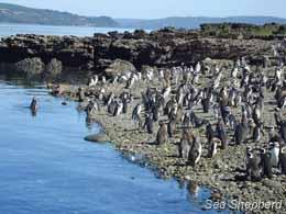 editorial_120405_1_3_pinguinos1