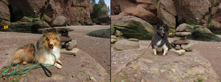 Beckett and Keltic walking on the OCEAN FLOOR at Hopewell Rocks