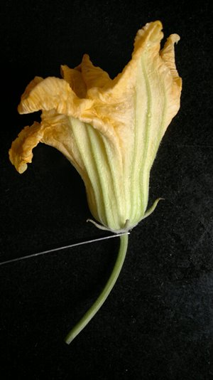 kumro phool stem remove for pumpkin flower recipe