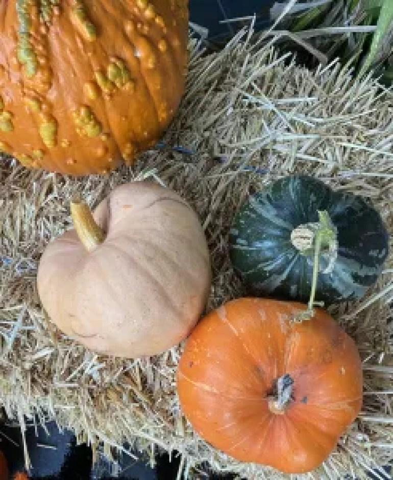 Outdoor Halloween Decor - Season & Serve Blog