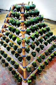 pop bottle planters3