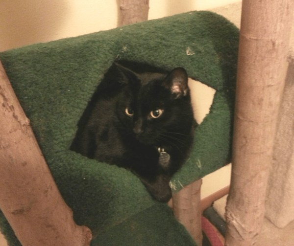 Lilo being cute in her cat tree
