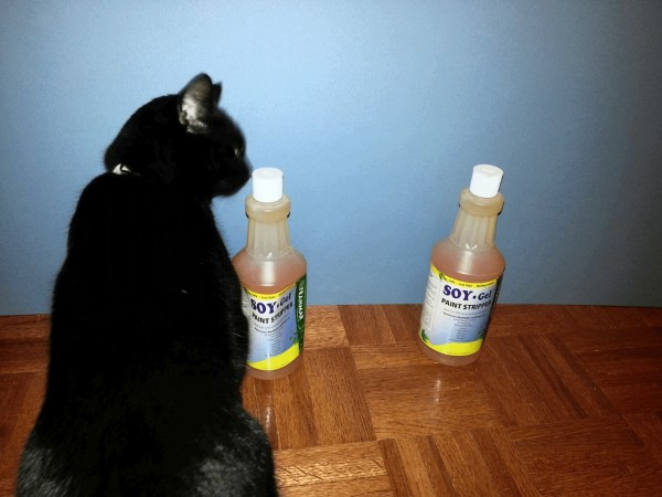 Cat sniffing a closed bottle against blue backdrop