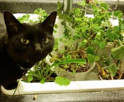 Cats and houseplants