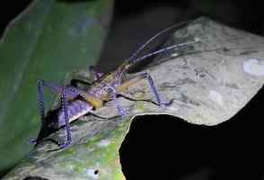 Invertebrate of the Day: Grasshopper