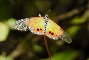 Invertebrates of the Day: Butterflies