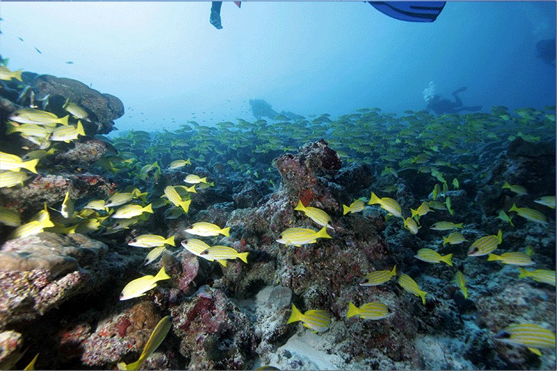 Diving-03WEB
