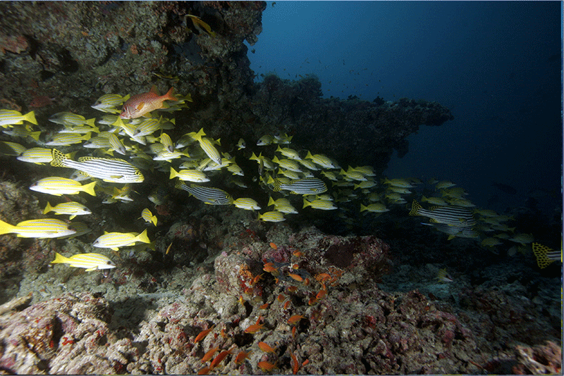 Diving-04WEB