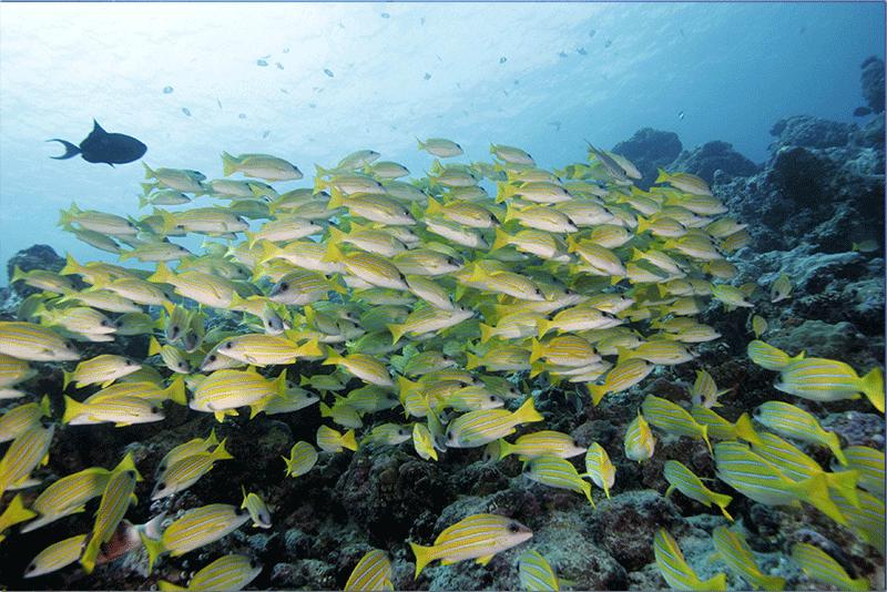 Diving-05WEB